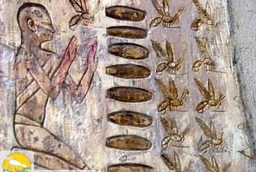 تاریخچه زنبورداری در جهان