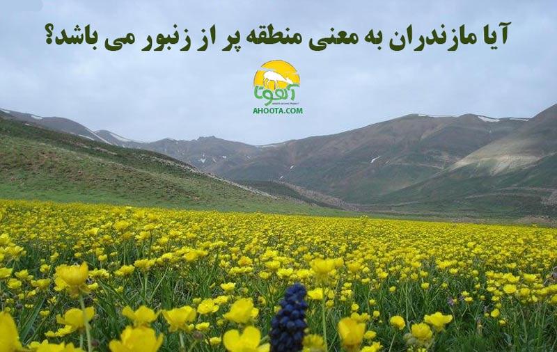 تاریخچه زنبورداری در ایران