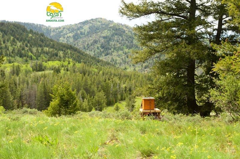 کندو عسل در جنگل