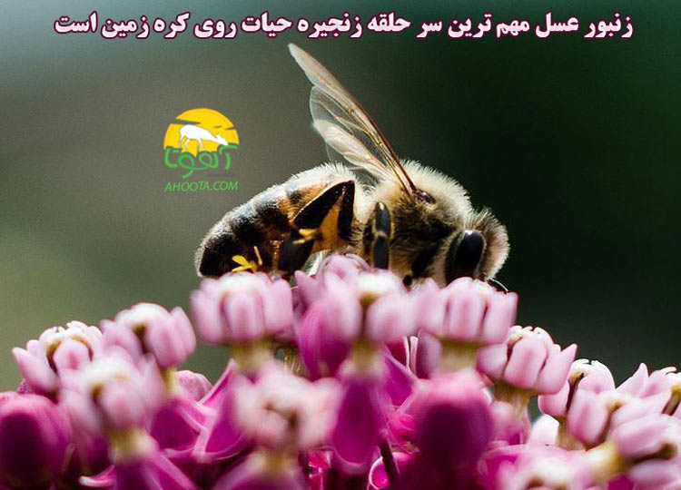 حذف زنبور عسل