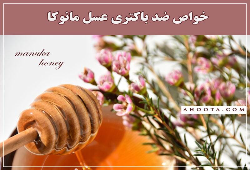 Antibacterial Benefits of Manuka Honey