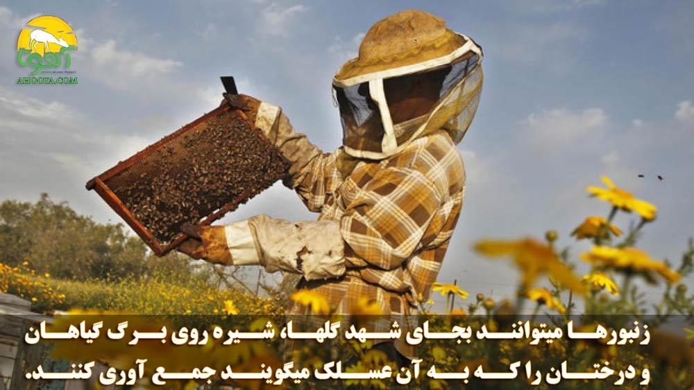 تولید عسل از عسلک