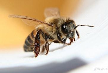 درمان خانگی نیش زنبور عسل در منزل