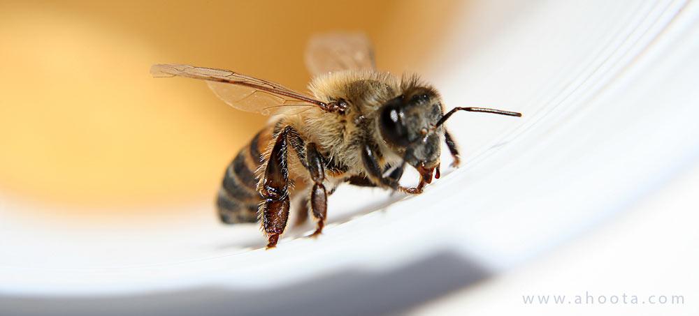درمان خانگی نیش زنبور عسل