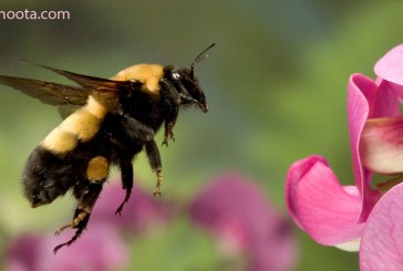 ۵ باور غلط درباره زنبورها