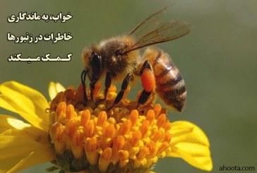 آیا میدانید زنبورها میخوابند؟