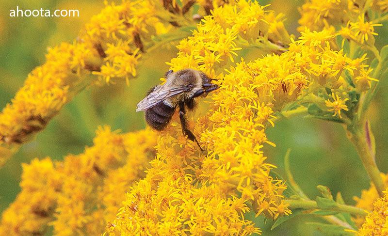 باورهای غلط درباره زنبور