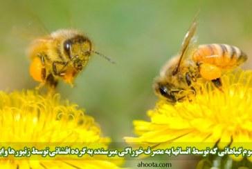 رابطه بین گل ها و زنبورها