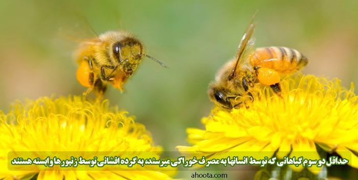رابطه همزیستی زنبور و گل
