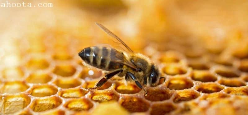 درمان HIV با زهر زنبور عسل