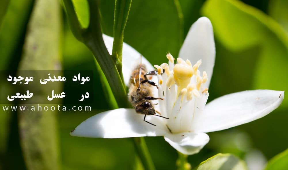 مواد معدنی موجود در عسل