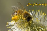 مصرف گرده گل و فواید آن
