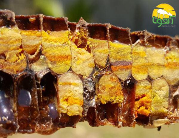 فواید نان زنبور عسل