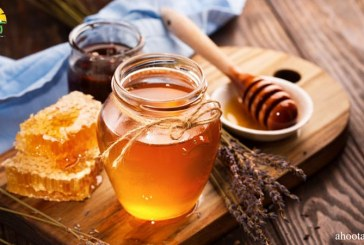 عسل در کتب آسمانی؛ جایگاه عسل در ادیان مختلف