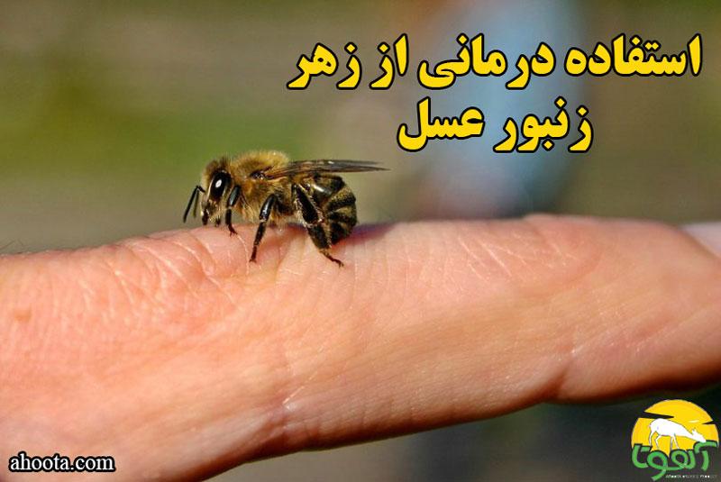 درباره استفاده درمانی از زهر زنبور عسل بیشتر بدانید