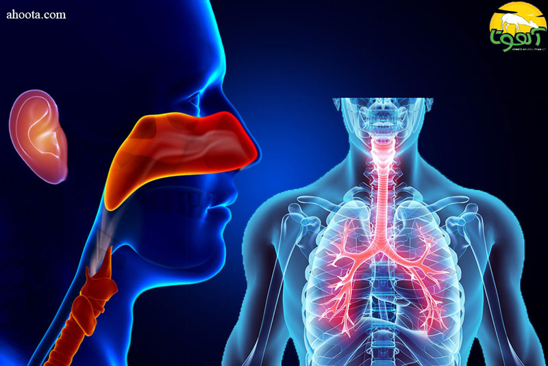 بره موم و درمان طبیعی بیماری های گوش، حلق و بینی و دستگاه تنفسی