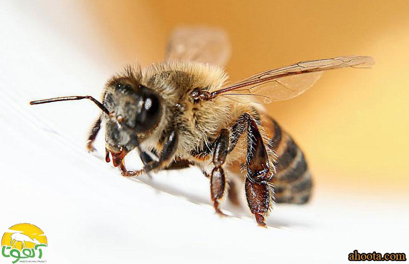 راهنمای درمان ام اس (MS) با زهر زنبور عسل