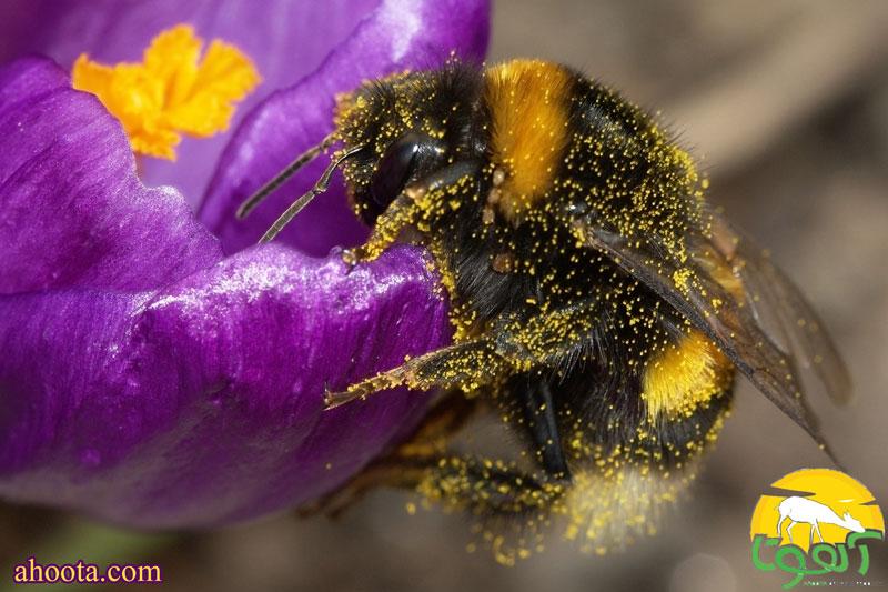 honey bee ....