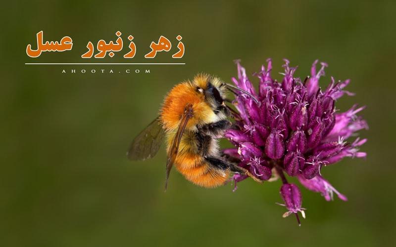 زهر زنبور