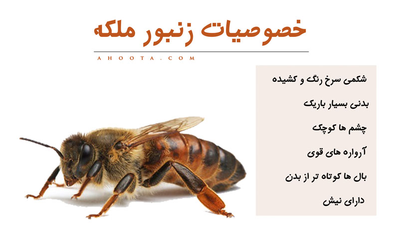 انواع زنبورعسل
